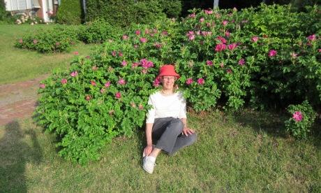 Roses in June, Aylmer, Quebec